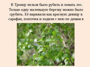 В Троицу нельзя было рубить и ломать лес. Только одну маленькую березку можн