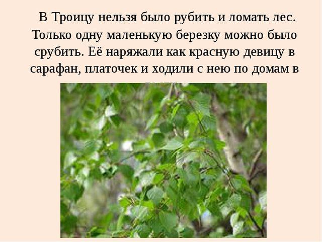 В Троицу нельзя было рубить и ломать лес. Только одну маленькую березку можн...