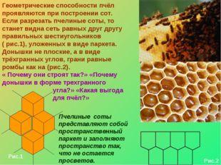 Геометрические способности пчёл проявляются при построении сот. Если разрезат