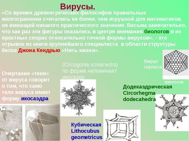 «Со времен древнегреческих философов правильные многогранники считались не бо...