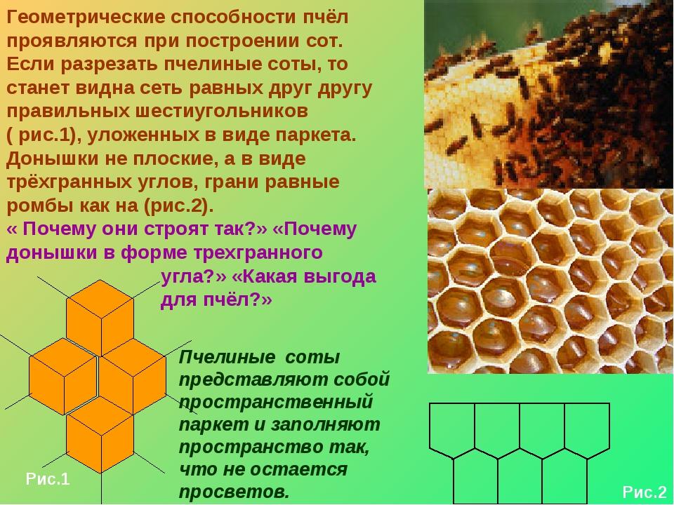 Геометрические способности пчёл проявляются при построении сот. Если разрезат...