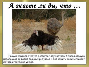 А знаете ли вы, что …  Размах крыльев страуса достигает двух метров. Крылья
