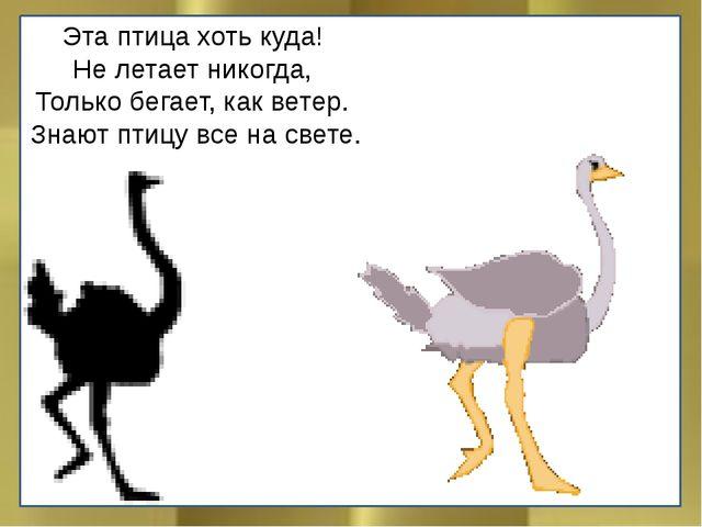 Эта птица хоть куда! Не летает никогда, Только бегает, как ветер. Знают птицу...