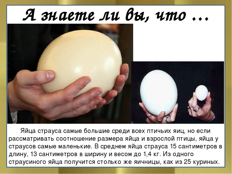 А знаете ли вы, что … Яйца страуса самые большие среди всех птичьих яиц, но...