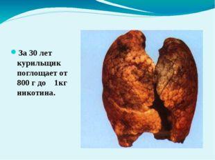 Легкие курящего человека За 30 лет курильщик поглощает от 800 г до 1кг ни