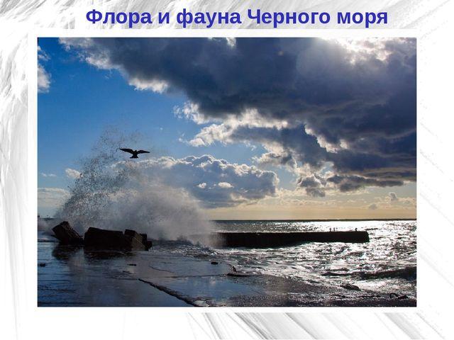 Флора и фауна Черного моря