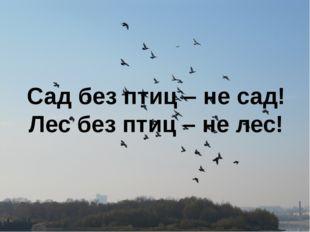 Сад без птиц – не сад! Лес без птиц – не лес!