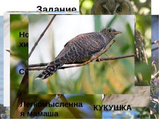 Задание 5: «Птичьи профессии» Птица-рыболов БАКЛАН Птица-плотник ДЯТЕЛ Птица-