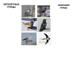 ПЕРЕЛЁТНЫЕ ПТИЦЫ зимующие птицы ВОРОНА ГРАЧ ЦАПЛЯ ЛАСТОЧКА ГОЛУБЬ