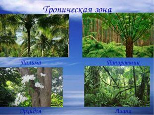 Тропическая зона Пальма Папоротник Орхидея Лиана