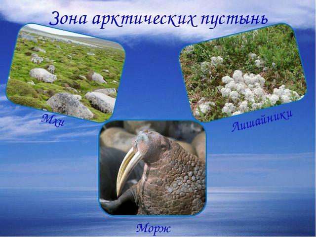 Зона арктических пустынь Мхи Лишайники Морж