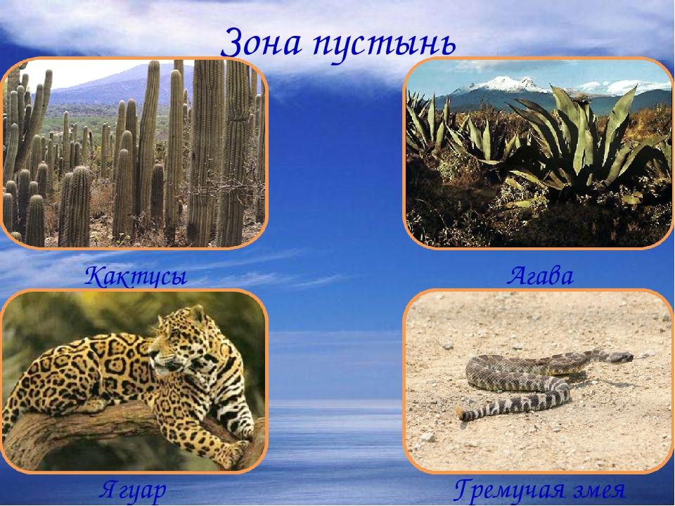 Зона пустынь Кактусы Агава Ягуар Гремучая змея