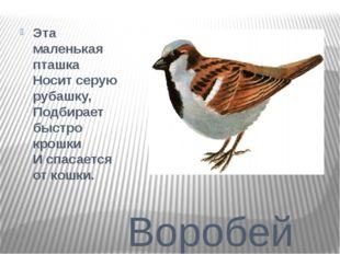 Воробей Эта маленькая пташка Носит серую рубашку, Подбирает быстро крошки И