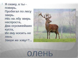 олень Я скажу, а ты - поверь. Пробегал по лесу зверь. Нёс на лбу зверь неспро