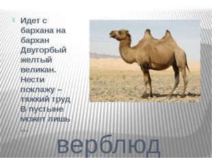 верблюд Идет с бархана на бархан Двугорбый желтый великан. Нести поклажу – тя