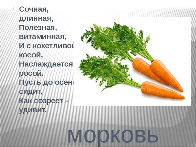 морковь Сочная, длинная, Полезная, витаминная, И с кокетливой косой, Наслажд...