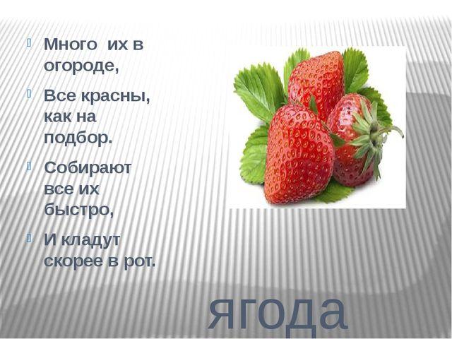 ягода Много их в огороде, Все красны, как на подбор. Собирают все их быстро,...
