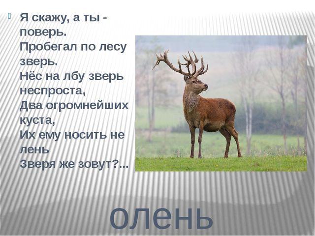 олень Я скажу, а ты - поверь. Пробегал по лесу зверь. Нёс на лбу зверь неспро...