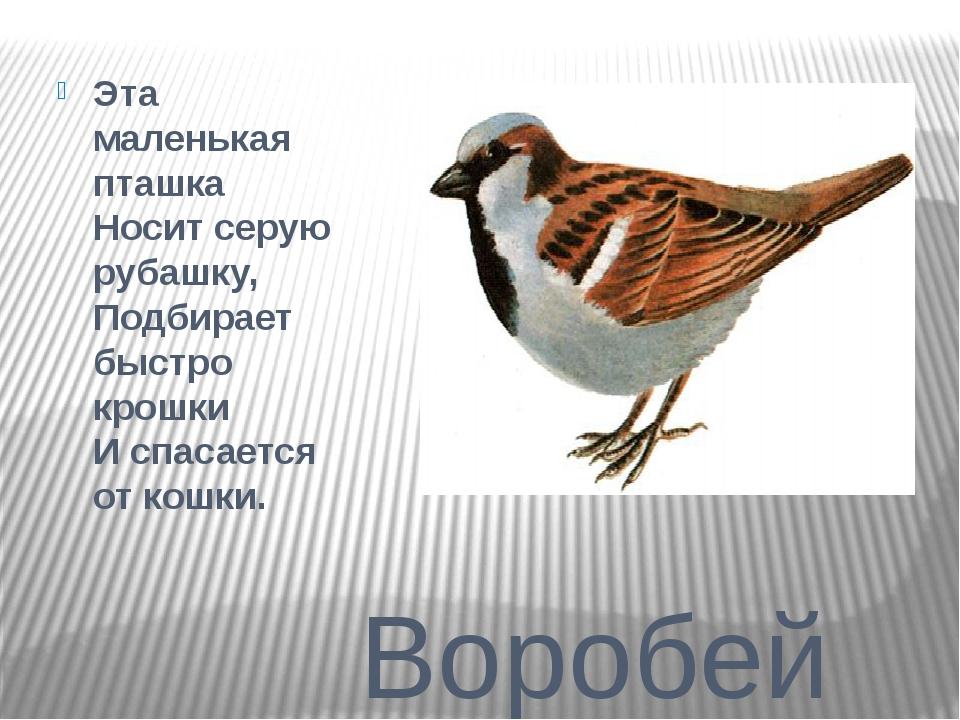 Воробей Эта маленькая пташка Носит серую рубашку, Подбирает быстро крошки И...