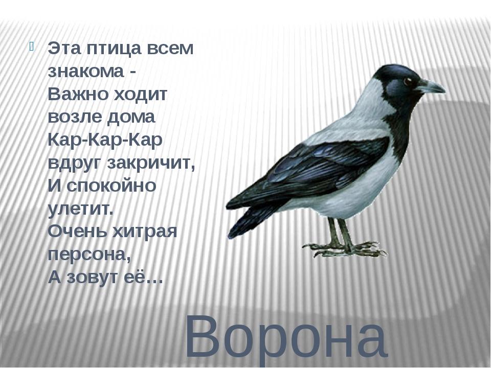 Ворона Эта птица всем знакома - Важно ходит возле дома Кар-Кар-Кар вдруг з...