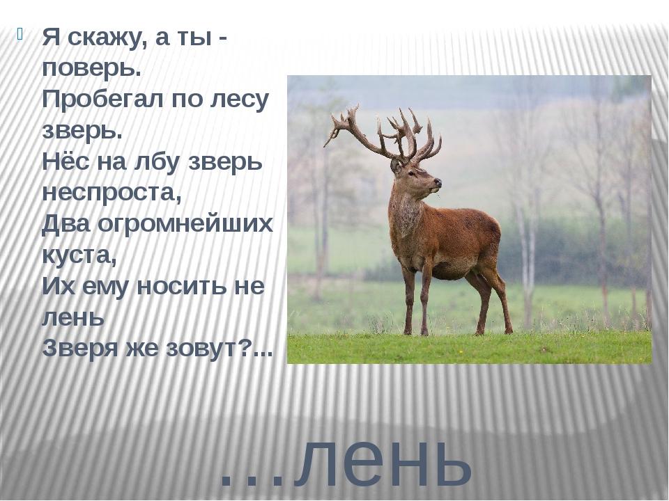 …лень Я скажу, а ты - поверь. Пробегал по лесу зверь. Нёс на лбу зверь неспро...