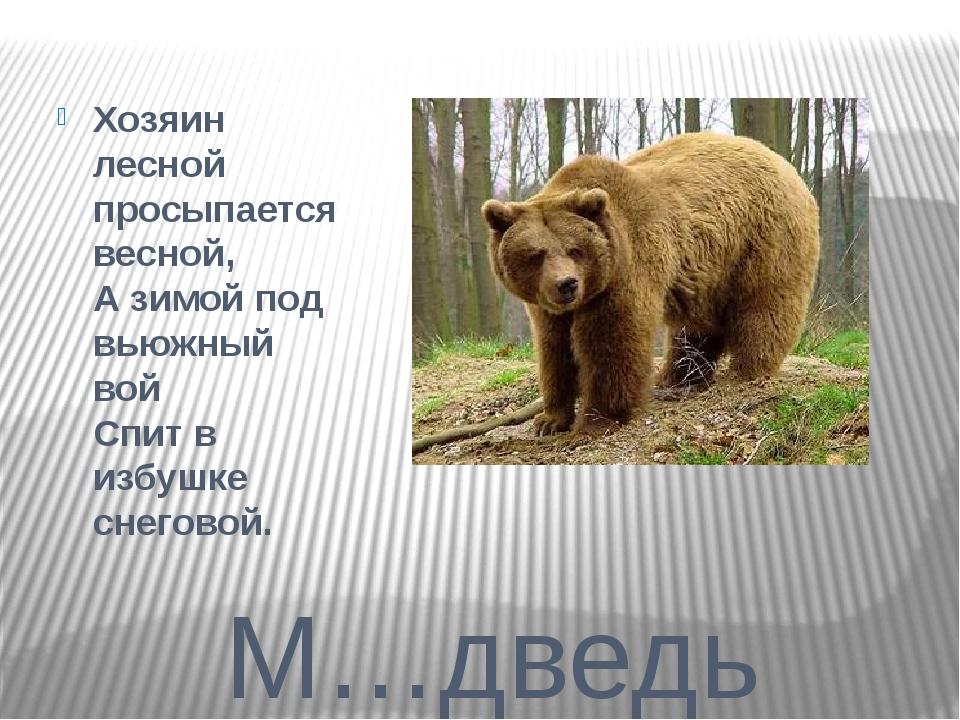 М…дведь Хозяин лесной просыпается весной, А зимой под вьюжный вой Спит в из...