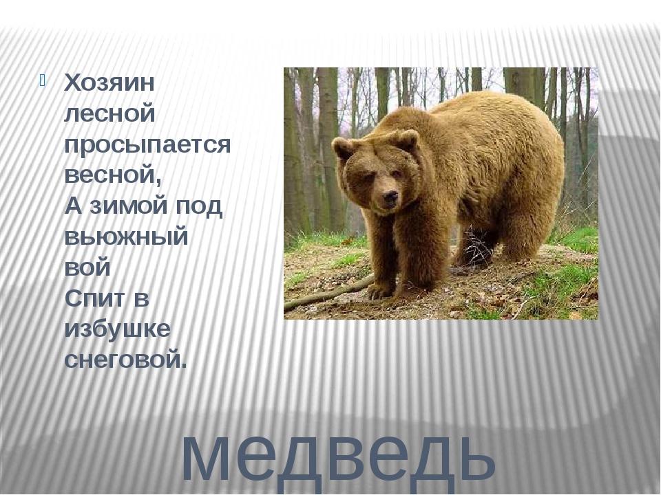 медведь Хозяин лесной просыпается весной, А зимой под вьюжный вой Спит в из...