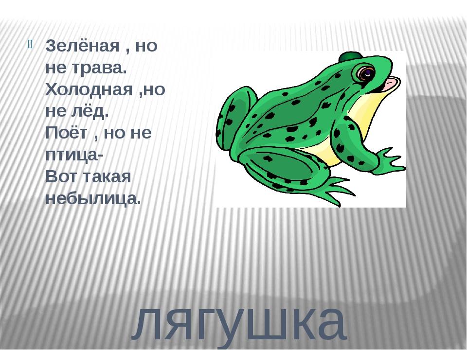 лягушка Зелёная , но не трава. Холодная ,но не лёд. Поёт , но не птица- Вот т...