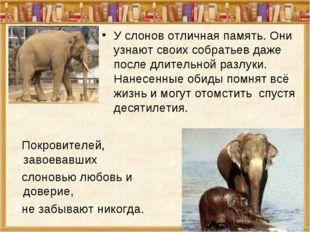 У слонов отличная память. Они узнают своих собратьев даже после длительной ра