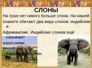 СЛОНЫ На суше нет никого больше слона. На нашей планете обитают два вида слон