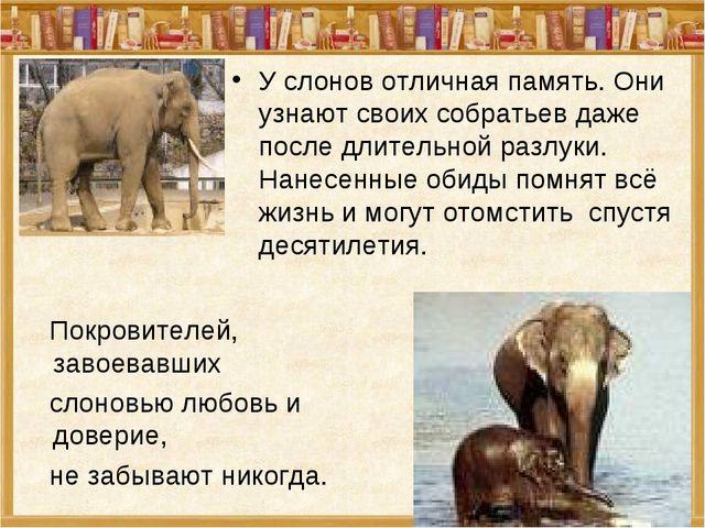У слонов отличная память. Они узнают своих собратьев даже после длительной ра...
