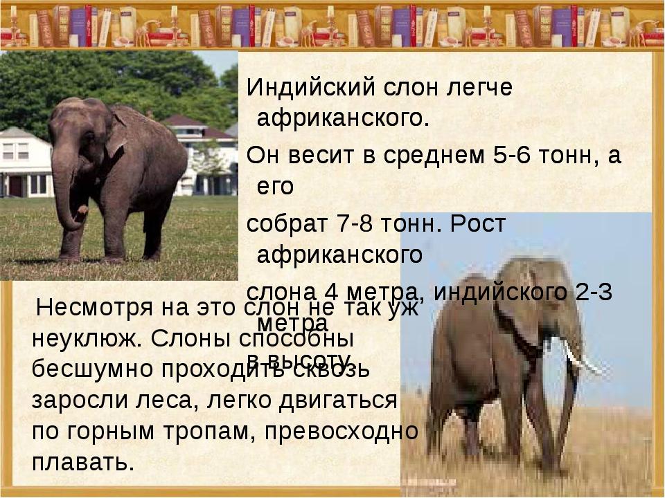 Несмотря на это слон не так уж неуклюж. Слоны способны бесшумно проходить ск...