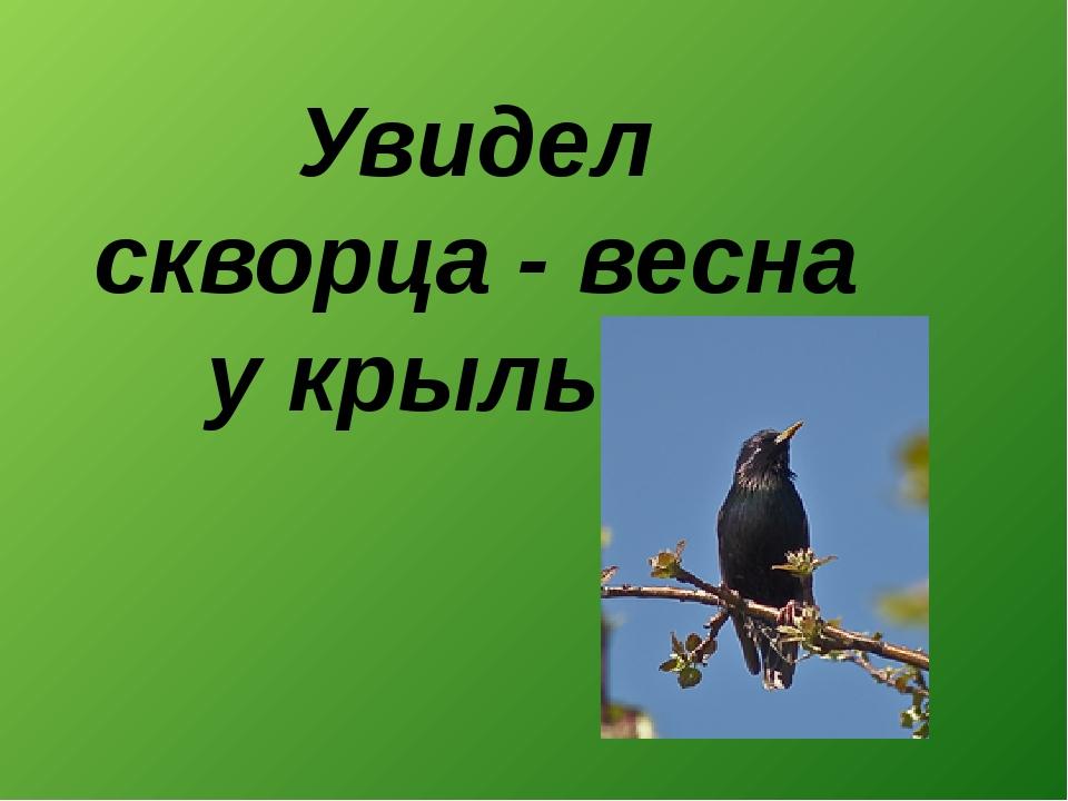Увидел скворца - весна у крыльца.
