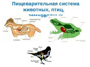 Пищеварительная система животных, птиц, земноводных