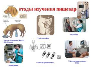Методы изучения пищеварения Методы хронических фистул И.П. Павлова Рентгеногр