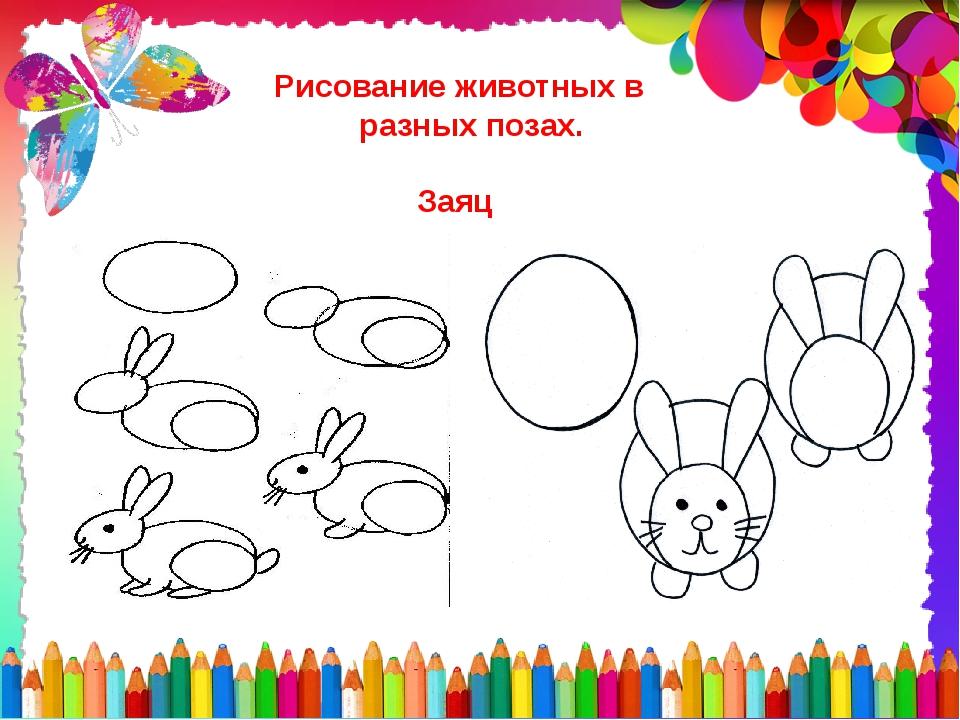 Рисование животных в разных позах. Заяц