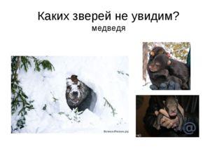 Каких зверей не увидим? медведя