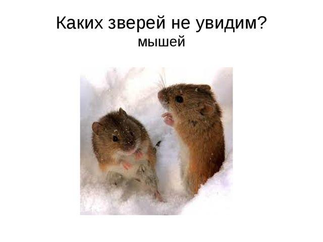 Каких зверей не увидим? мышей