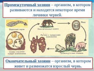 Промежуточный хозяин – организм, в котором развиваются и находятся некоторое