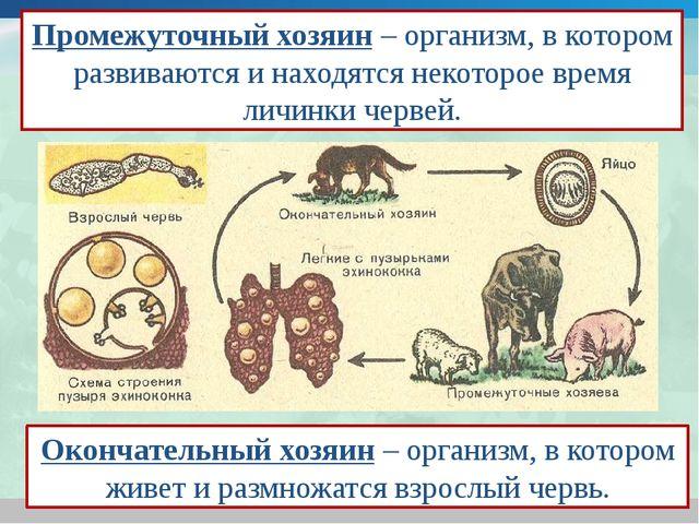 Промежуточный хозяин – организм, в котором развиваются и находятся некоторое...