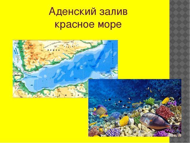 Аденский залив красное море