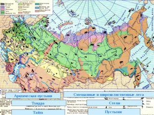 Арктическая пустыня Тундра Тайга Смешанные и широколиственные леса Степи Пуст