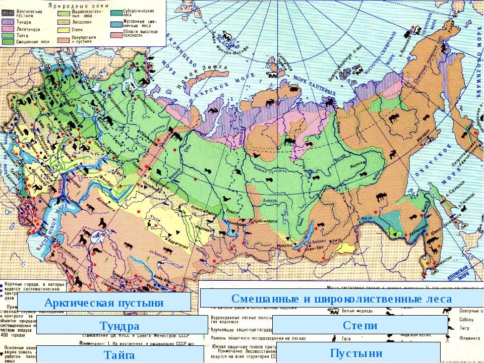 Арктическая пустыня Тундра Тайга Смешанные и широколиственные леса Степи Пуст...