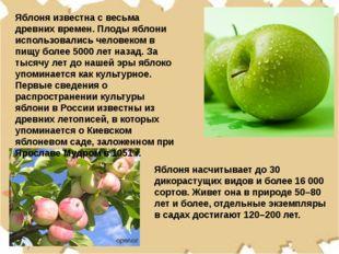 Яблоня известна с весьма древних времен. Плоды яблони использовались человеко