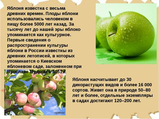 Яблоня известна с весьма древних времен. Плоды яблони использовались человеко...
