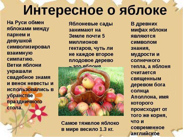 Интересное о яблоке Яблоневые сады занимают на Земле почти 5 миллионов гектар...