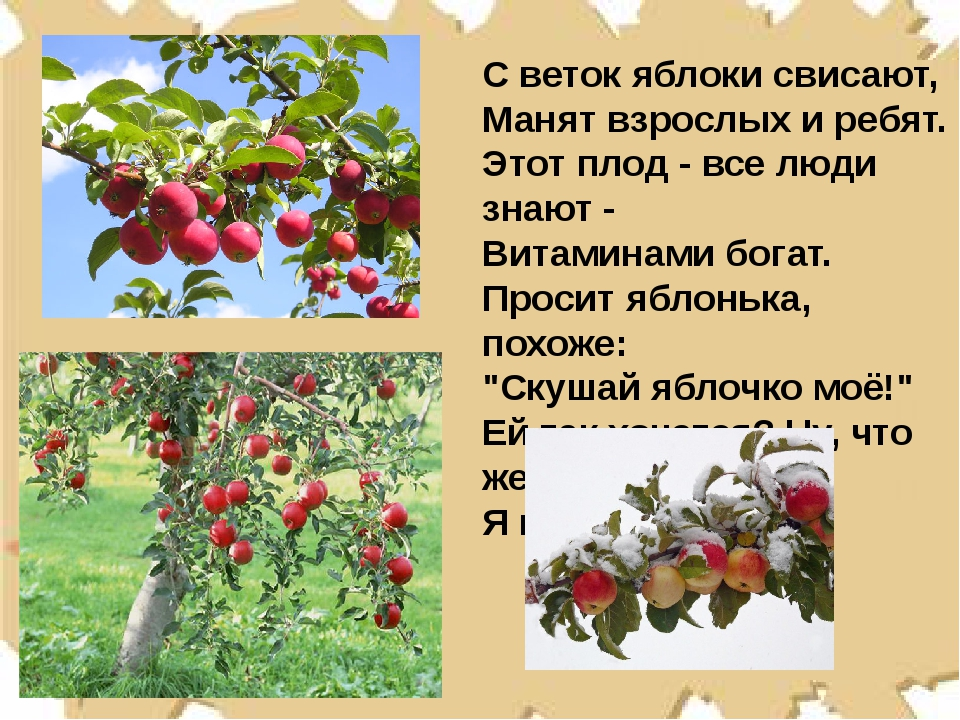 С веток яблоки свисают, Манят взрослых и ребят. Этот плод - все люди знают -...