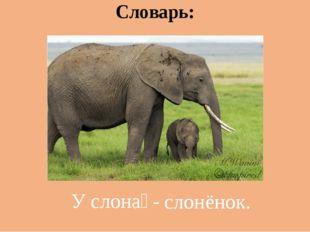 Словарь: У слона́ - слонёнок.