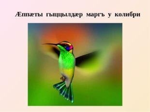 Æппæты гыццылдæр маргъ у колибри