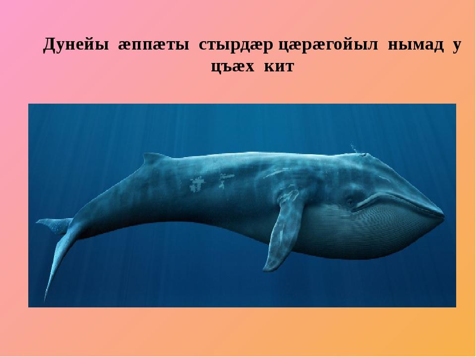 Дунейы æппæты стырдæр цæрæгойыл нымад у цъæх кит